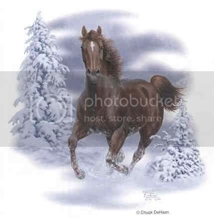 snow horse Pictures, Images and Photos
